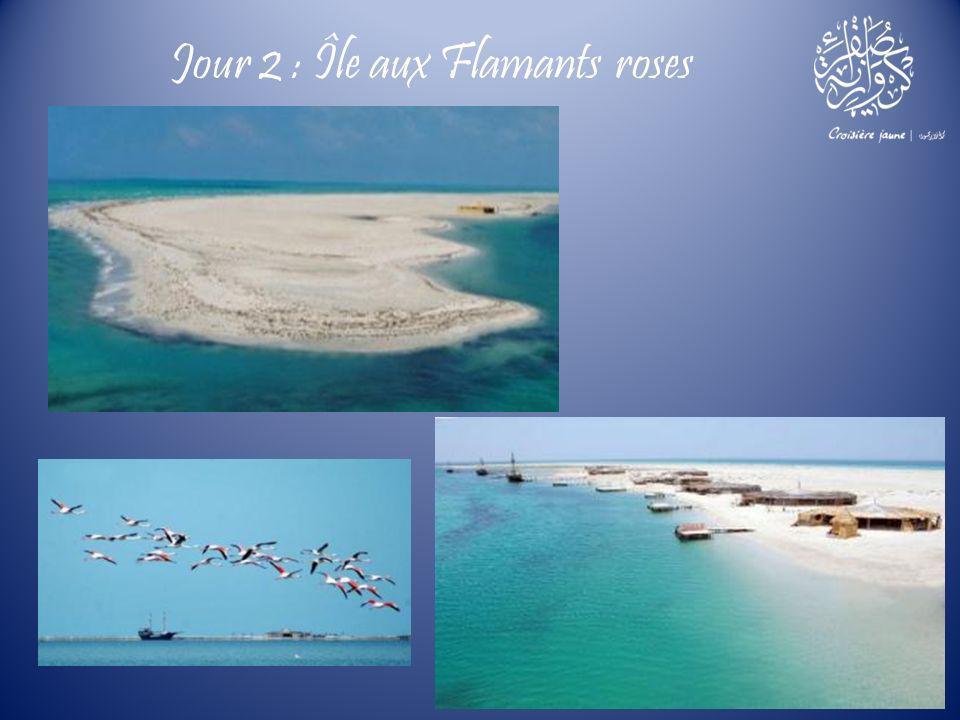 Jour 2 : Île aux Flamants roses