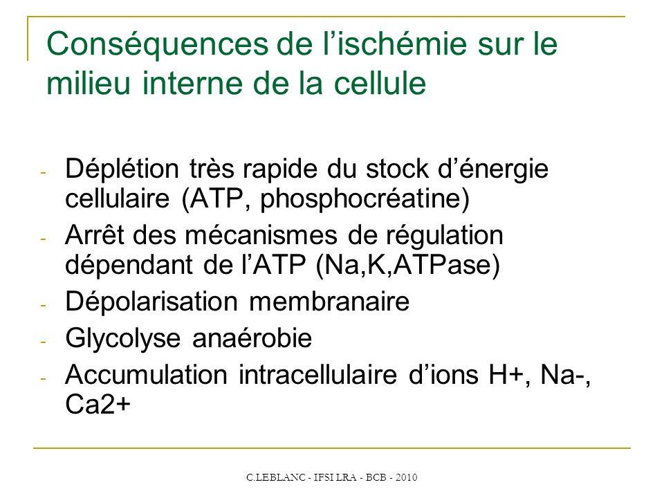 C.LEBLANC - IFSI LRA - BCB - 2010 - Déplétion très rapide du stock dénergie cellulaire (ATP, phosphocréatine) - Arrêt des mécanismes de régulation dép