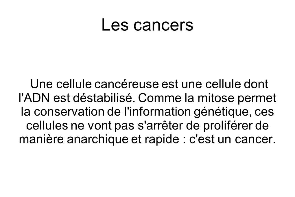 Les cancers Une cellule cancéreuse est une cellule dont l ADN est déstabilisé.