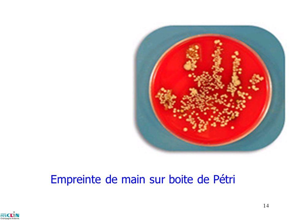 13 Bacilles gram - genre entérobactérie