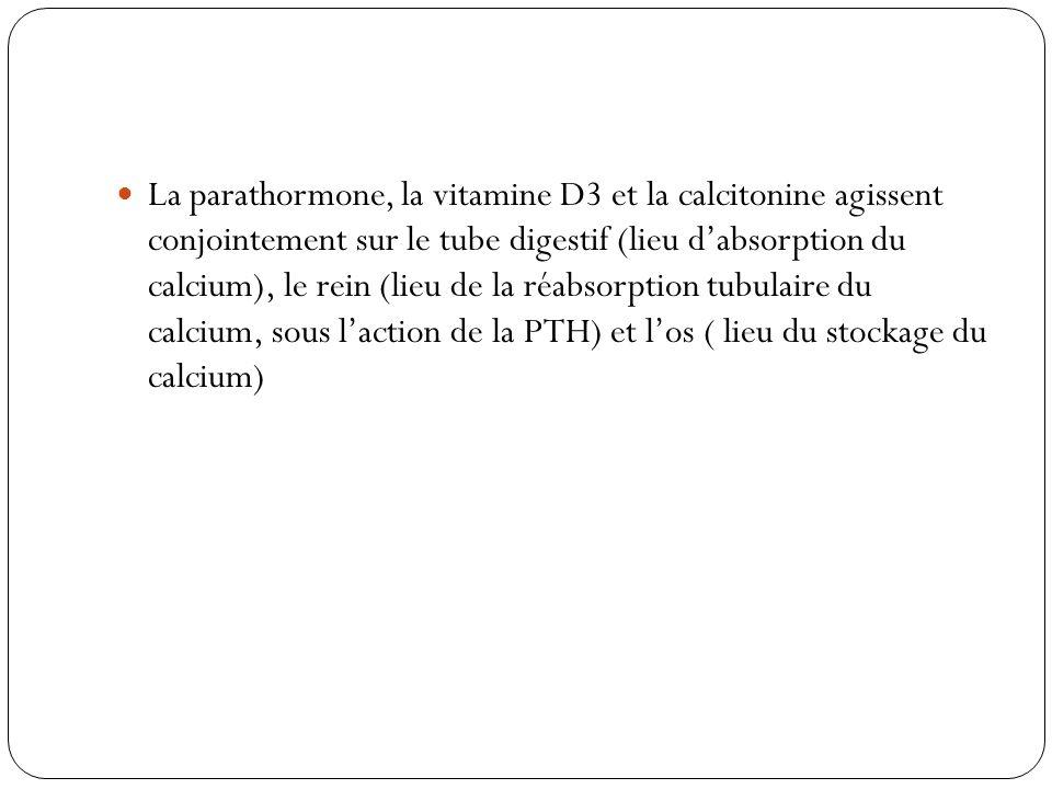 La parathormone, la vitamine D3 et la calcitonine agissent conjointement sur le tube digestif (lieu dabsorption du calcium), le rein (lieu de la réabs
