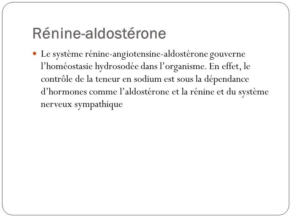 Rénine-aldostérone Le système rénine-angiotensine-aldostérone gouverne lhoméostasie hydrosodée dans lorganisme. En effet, le contrôle de la teneur en