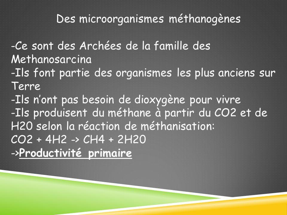 Des microorganismes méthanogènes -Ce sont des Archées de la famille des Methanosarcina -Ils font partie des organismes les plus anciens sur Terre -Ils nont pas besoin de dioxygène pour vivre -Ils produisent du méthane à partir du CO2 et de H20 selon la réaction de méthanisation: CO2 + 4H2 -> CH4 + 2H20 ->Productivité primaire