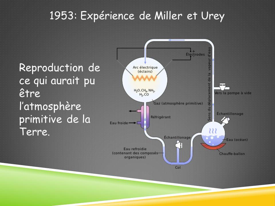 1953: Expérience de Miller et Urey Reproduction de ce qui aurait pu être latmosphère primitive de la Terre.