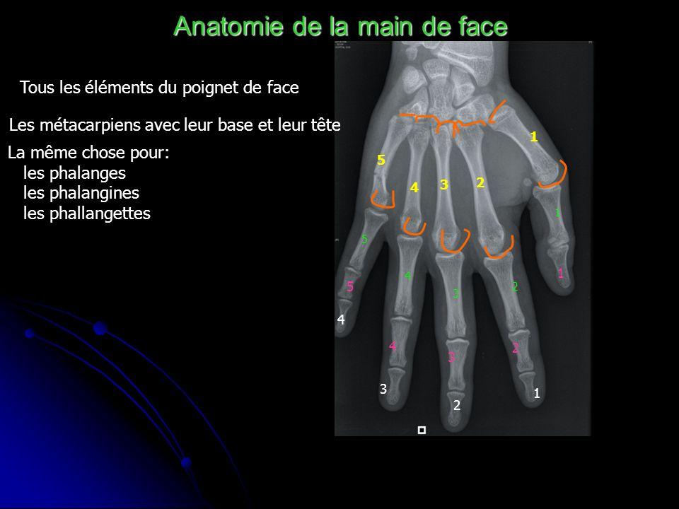 Anatomie de la main de face Tous les éléments du poignet de face Les métacarpiens avec leur base et leur tête 1 2 3 4 5 La même chose pour: les phalan