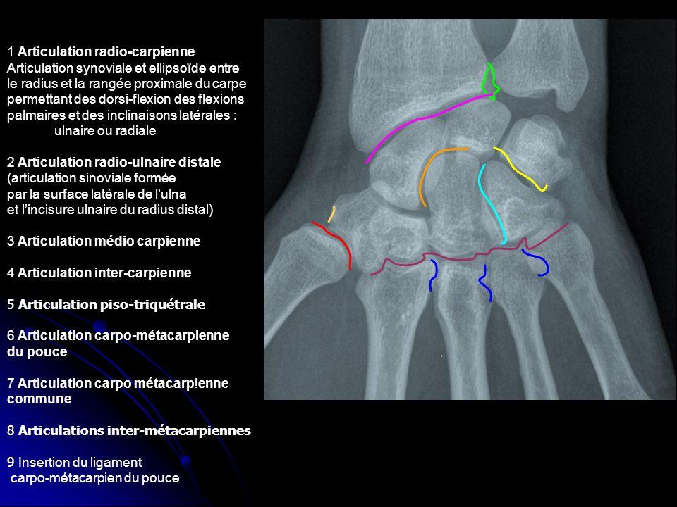 1 Articulation radio-carpienne Articulation synoviale et ellipsoïde entre le radius et la rangée proximale du carpe permettant des dorsi-flexion des f