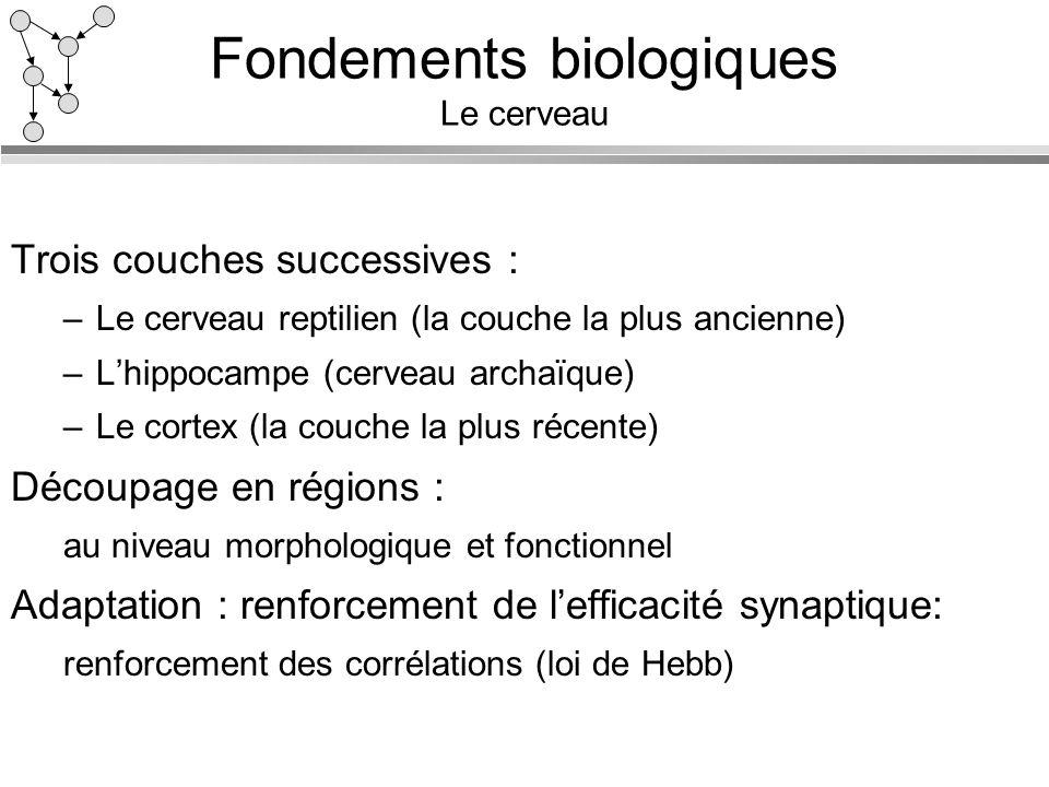 Fondements biologiques Le cerveau Trois couches successives : –Le cerveau reptilien (la couche la plus ancienne) –Lhippocampe (cerveau archaïque) –Le
