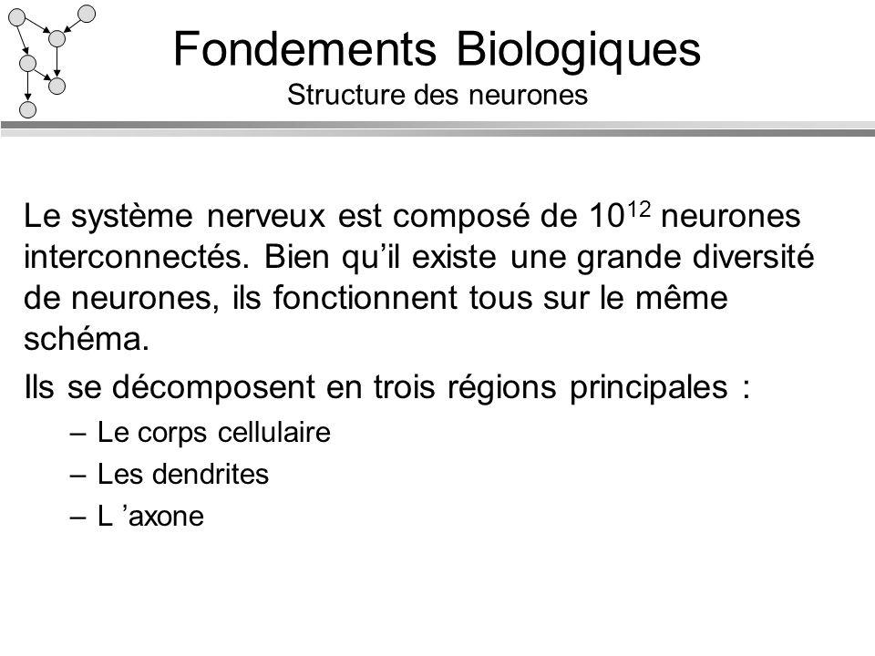 Fondements Biologiques Structure des neurones Le système nerveux est composé de 10 12 neurones interconnectés. Bien quil existe une grande diversité d