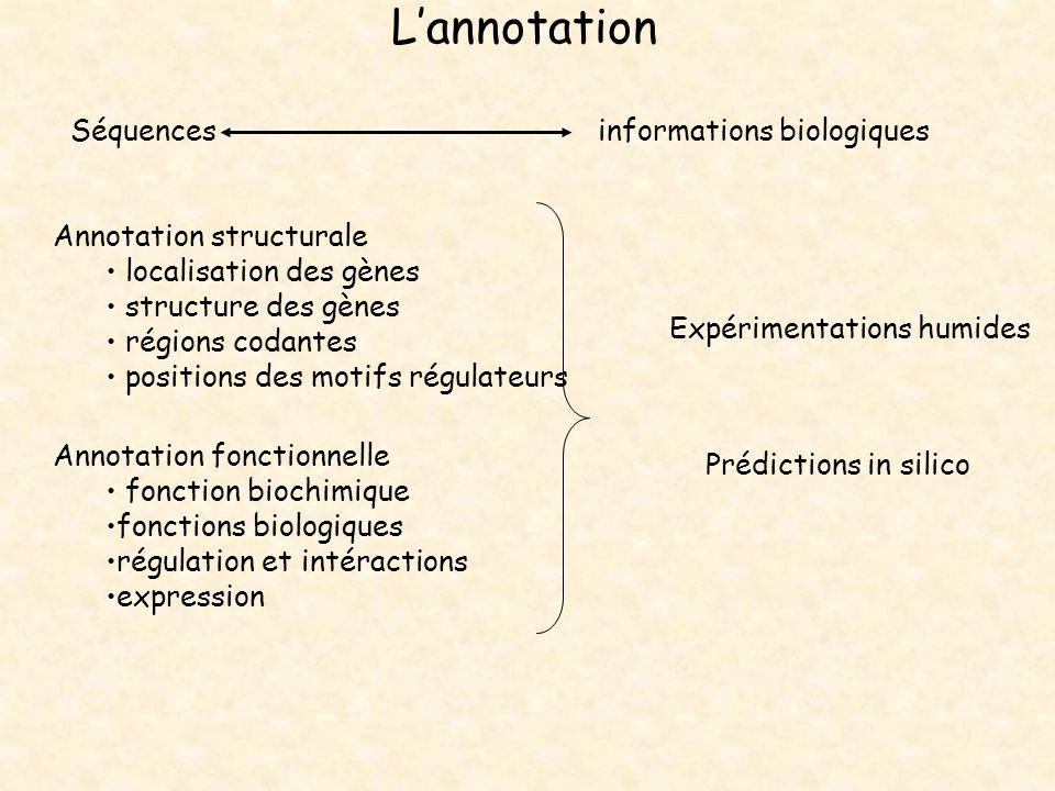 Lannotation Séquences informations biologiques Annotation structurale localisation des gènes structure des gènes régions codantes positions des motifs