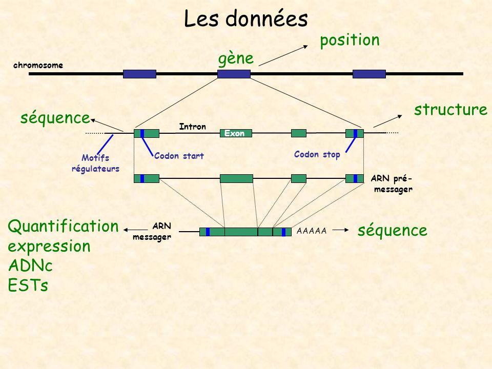 Les données AAAAA Exon Intron ARN messager Codon start Codon stop chromosome Quantification expression ADNc ESTs séquence gène position structure séqu