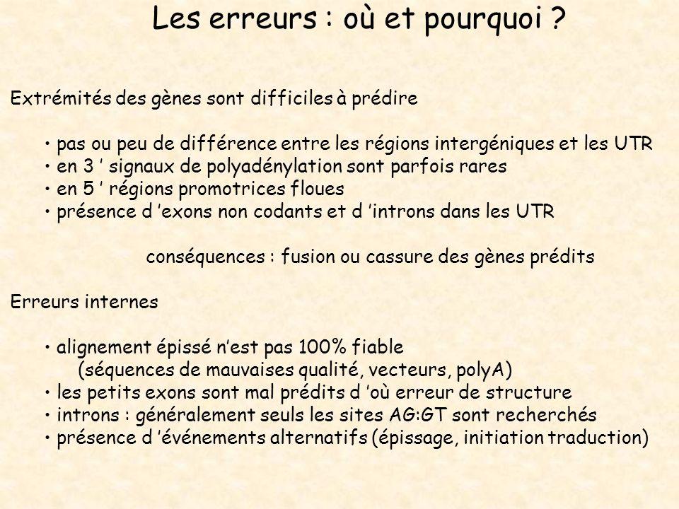 Les erreurs : où et pourquoi ? Extrémités des gènes sont difficiles à prédire pas ou peu de différence entre les régions intergéniques et les UTR en 3