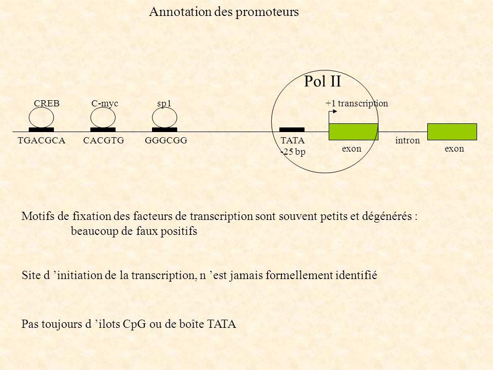 Annotation des promoteurs Motifs de fixation des facteurs de transcription sont souvent petits et dégénérés : beaucoup de faux positifs Site d initiat