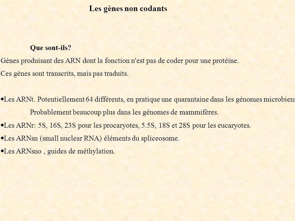 Les gènes non codants Que sont-ils? Gènes produisant des ARN dont la fonction n'est pas de coder pour une protéine. Ces gènes sont transcrits, mais pa