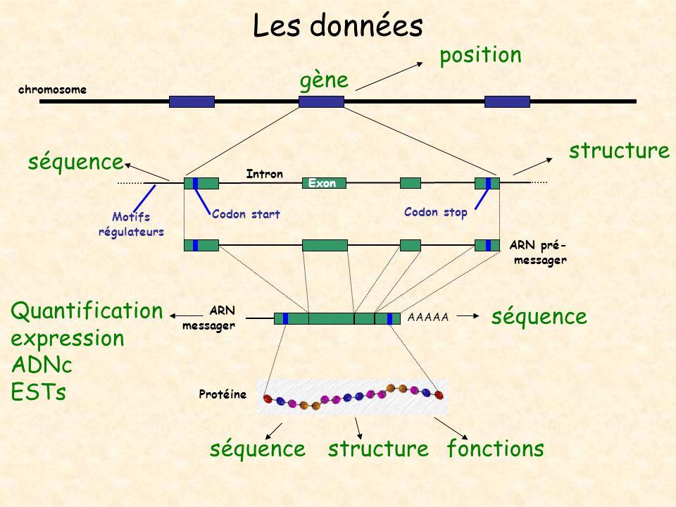 Les données AAAAA Exon Intron ARN pré- messager ARN messager Protéine Codon start Codon stop chromosome séquencestructurefonctions Quantification expr