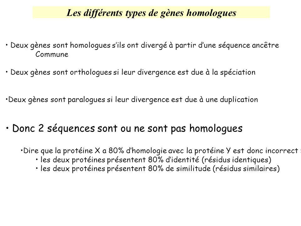 Les différents types de gènes homologues Deux gènes sont homologues sils ont divergé à partir dune séquence ancêtre Commune Deux gènes sont orthologue