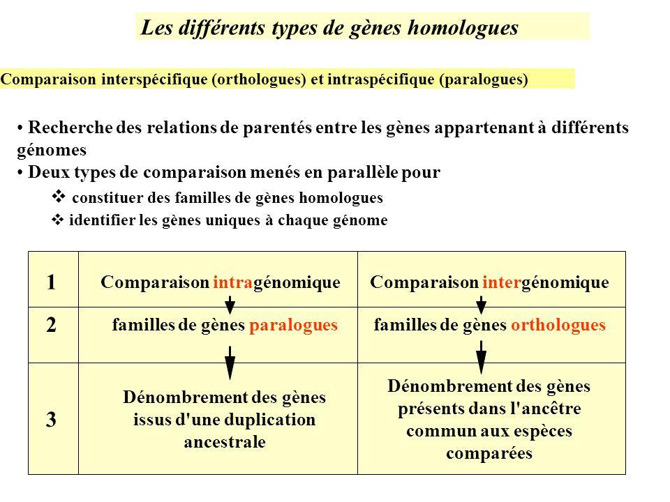 Recherche des relations de parentés entre les gènes appartenant à différents génomes Deux types de comparaison menés en parallèle pour constituer des