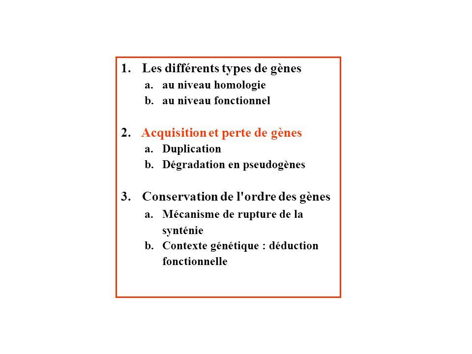 1. Les différents types de gènes a.au niveau homologie b.au niveau fonctionnel 2. Acquisition et perte de gènes a.Duplication b.Dégradation en pseudog
