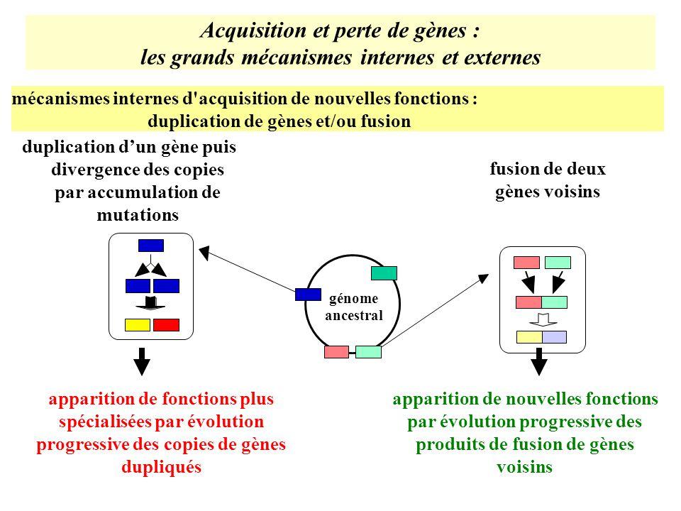 Acquisition et perte de gènes : les grands mécanismes internes et externes mécanismes internes d'acquisition de nouvelles fonctions : duplication de g