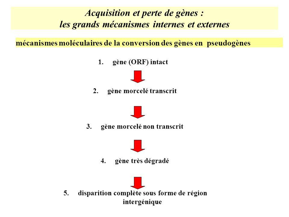Acquisition et perte de gènes : les grands mécanismes internes et externes 2.gène morcelé transcrit 3.gène morcelé non transcrit 4.gène très dégradé 5