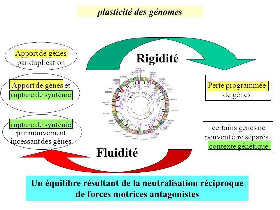 plasticité des génomes Un équilibre résultant de la neutralisation réciproque de forces motrices antagonistes Fluidité rupture de synténie par mouveme