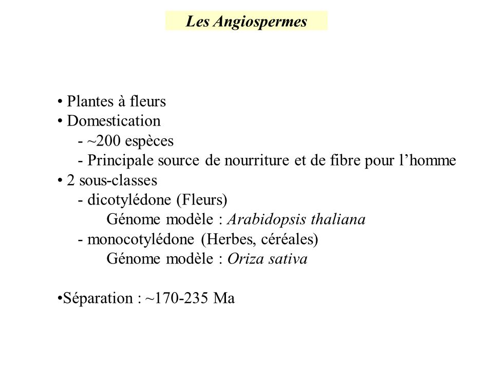 Les Angiospermes Plantes à fleurs Domestication - ~200 espèces - Principale source de nourriture et de fibre pour lhomme 2 sous-classes - dicotylédone