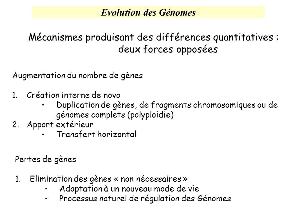 Mécanismes produisant des différences quantitatives : deux forces opposées Augmentation du nombre de gènes 1.Création interne de novo Duplication de g