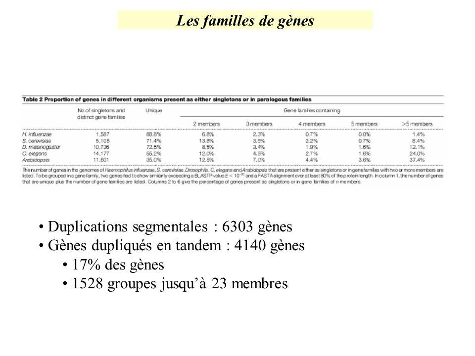 Duplications segmentales : 6303 gènes Gènes dupliqués en tandem : 4140 gènes 17% des gènes 1528 groupes jusquà 23 membres Les familles de gènes
