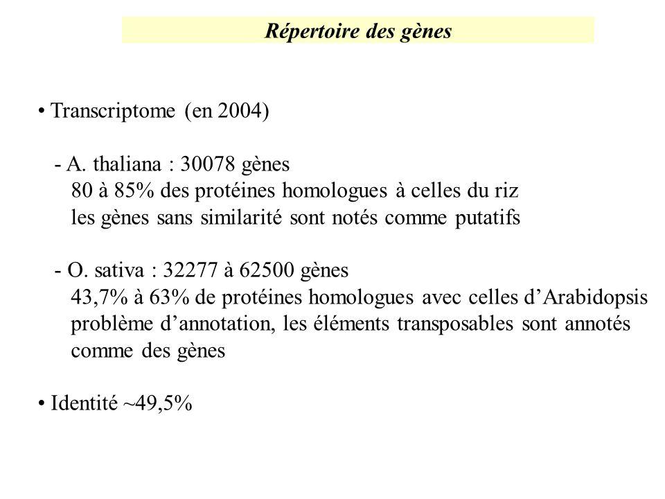 Répertoire des gènes Transcriptome (en 2004) - A. thaliana : 30078 gènes 80 à 85% des protéines homologues à celles du riz les gènes sans similarité s