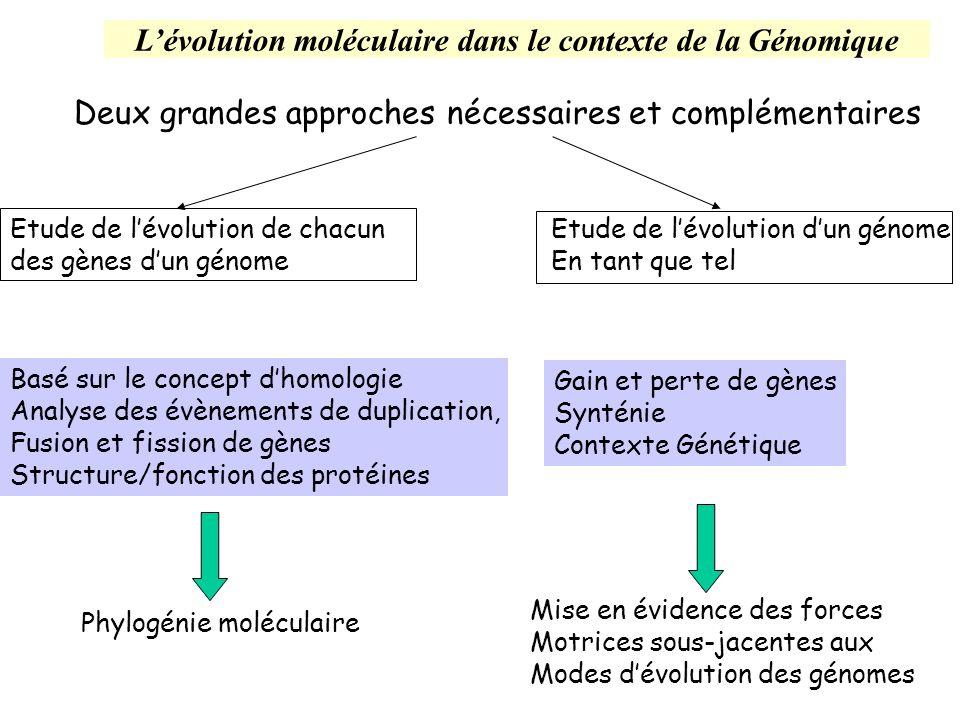 Notion de génome minimal Concept Rechercher le jeu de gènes minimal permettant une vie autonome permettrait de se représenter le contenu génétique des premiers organismes ancestraux Premières approches expérimentales génomique comparative des premiers petits génomes séquencés (H.