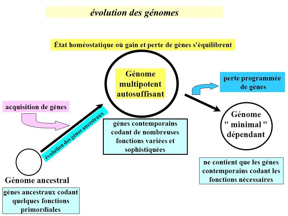 Génome