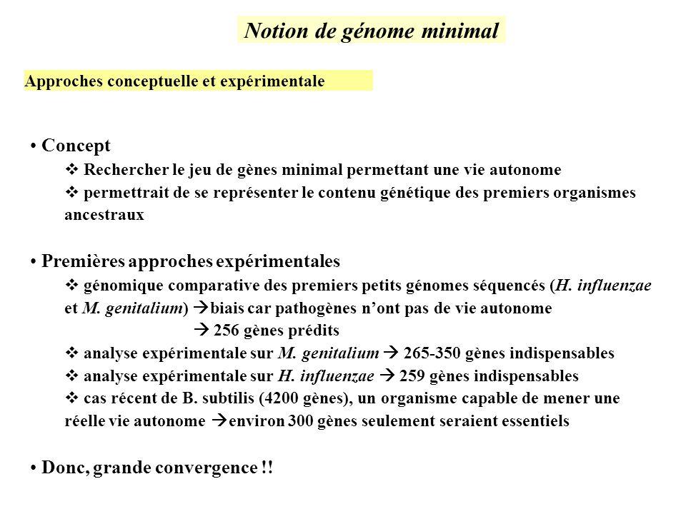 Notion de génome minimal Concept Rechercher le jeu de gènes minimal permettant une vie autonome permettrait de se représenter le contenu génétique des