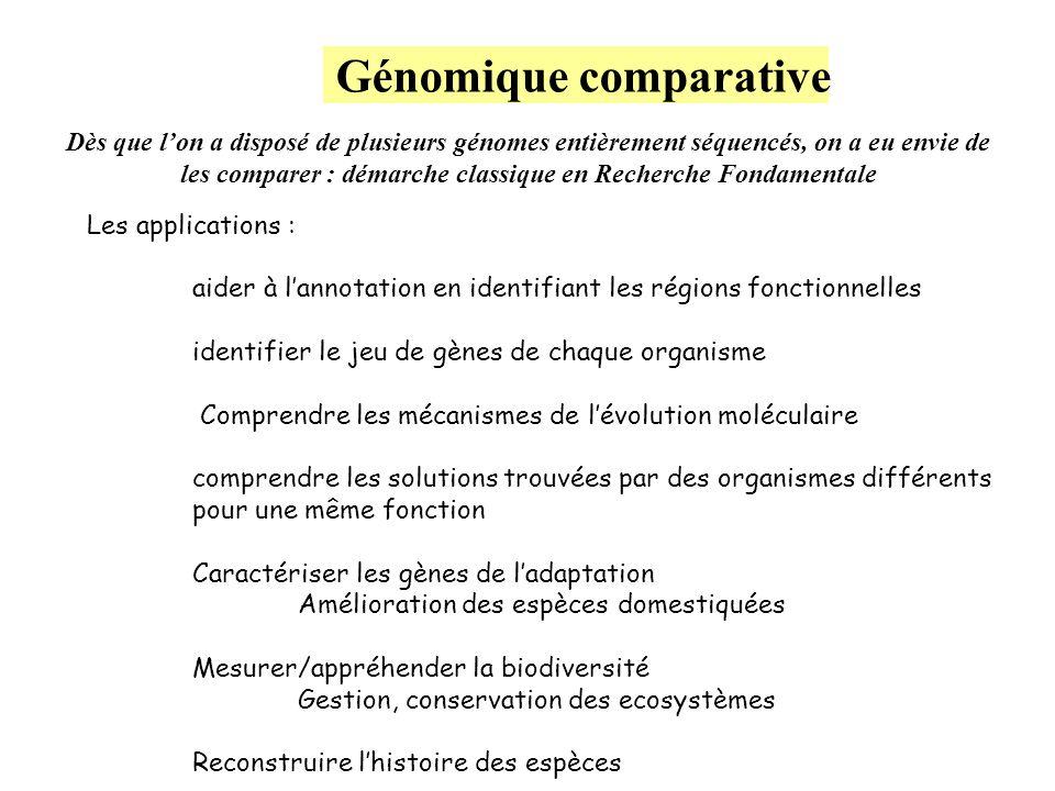 Génomique comparative Dès que lon a disposé de plusieurs génomes entièrement séquencés, on a eu envie de les comparer : démarche classique en Recherch