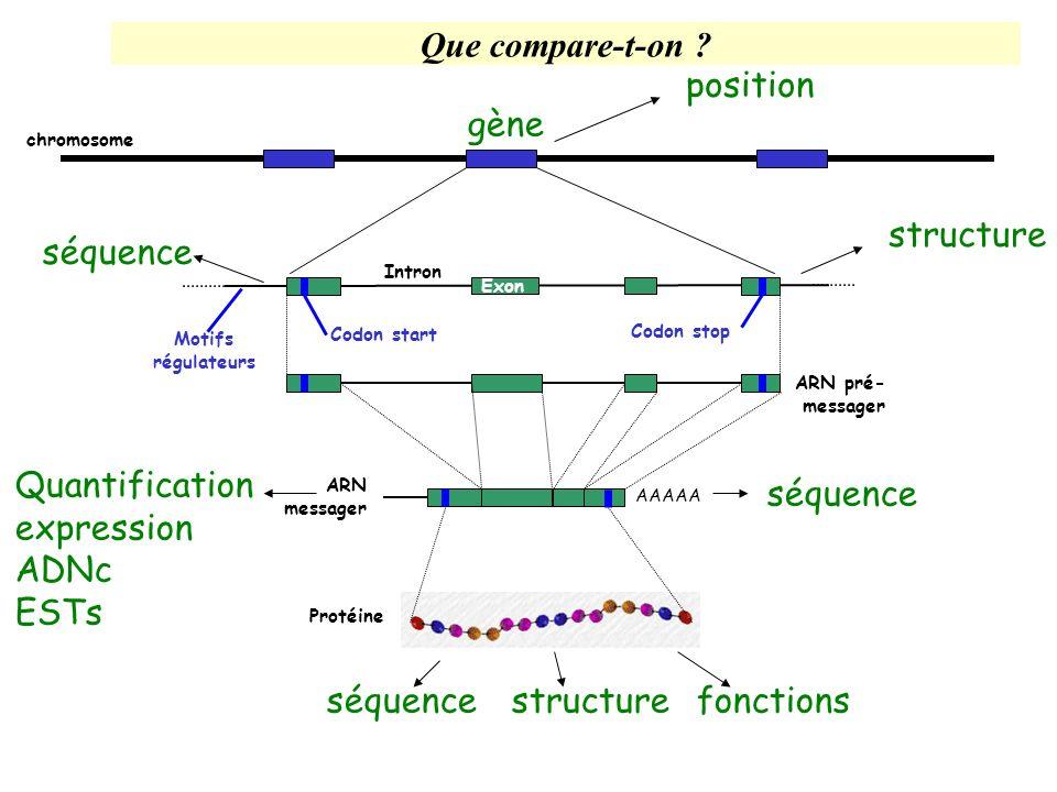 AtRH23 30924-32477 ATPase 39026-43607 ATPase 38791-34264 AtRH19 33516-31996 30674-2883827833-2670826071-24586 acetyltransferase 20390-17958 Région répétée 11461-15991 ATPase 16434-1674217945-19438 AtRH4 21978-25453 acetyltransferase MDC16 Chr III F20D21 Chr I F28P22 Chr I 7857-9397 10299-1155412386-1359014209-1539716772-1818419507-2129123369-2348925725-2832332062-3434834758-3662216434-16742 72698-7153269661-6591565071-6206361582-5793357259-5382153392-5106050484-4849947823-45956 Flavonol synthase Flavonol synthase AtRH25AtRH26 AtRH31 Pyruvate kinase Pyruvate kinase MBK5 ChrV MAH20 Chr V Exemple de régions dupliquées (I)