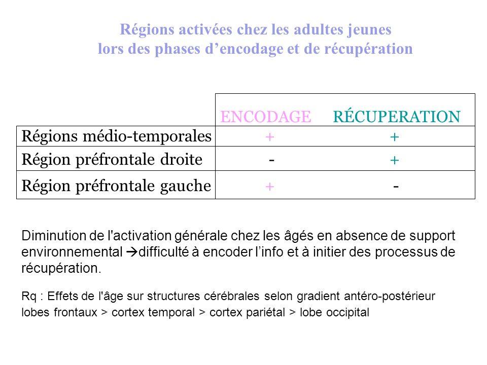 Régions activées chez les adultes jeunes lors des phases dencodage et de récupération ENCODAGE RÉCUPERATION Régions médio-temporales+ + Région préfron