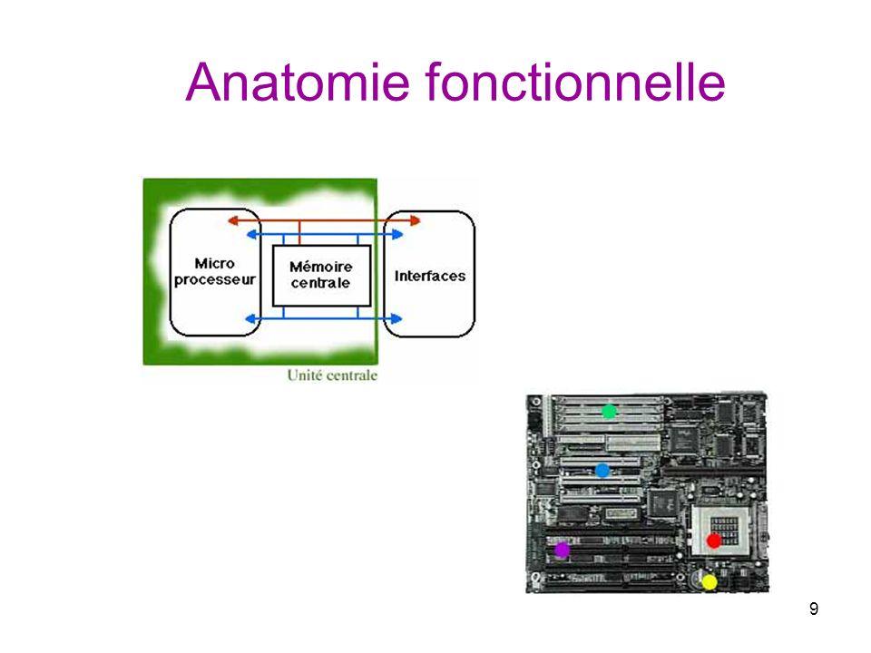 9 Anatomie fonctionnelle