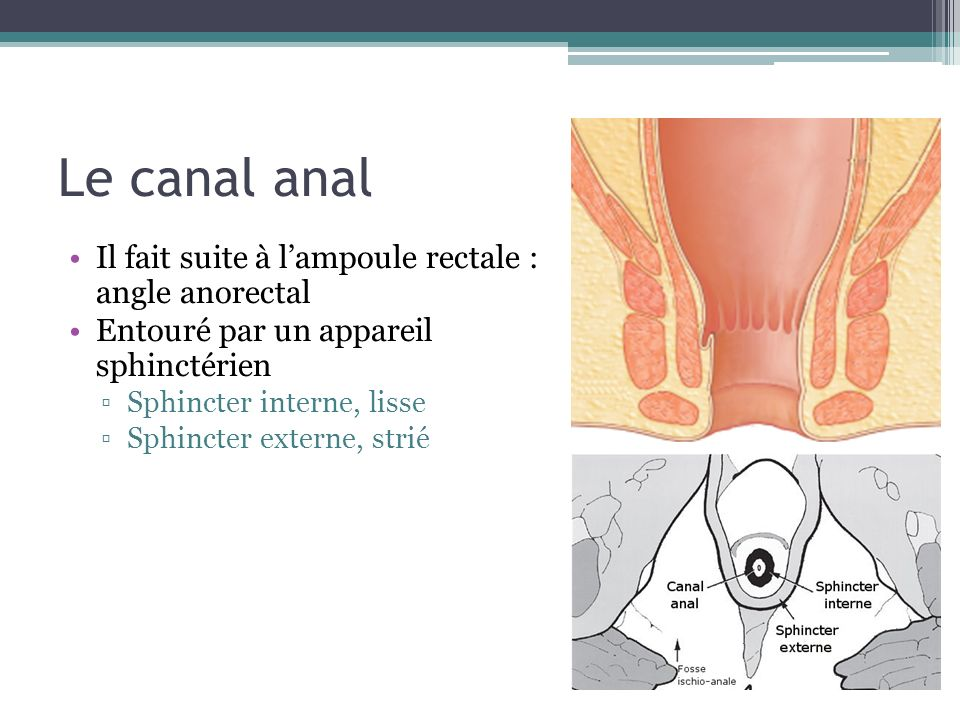 Le canal anal Il fait suite à lampoule rectale : angle anorectal Entouré par un appareil sphinctérien Sphincter interne, lisse Sphincter externe, stri