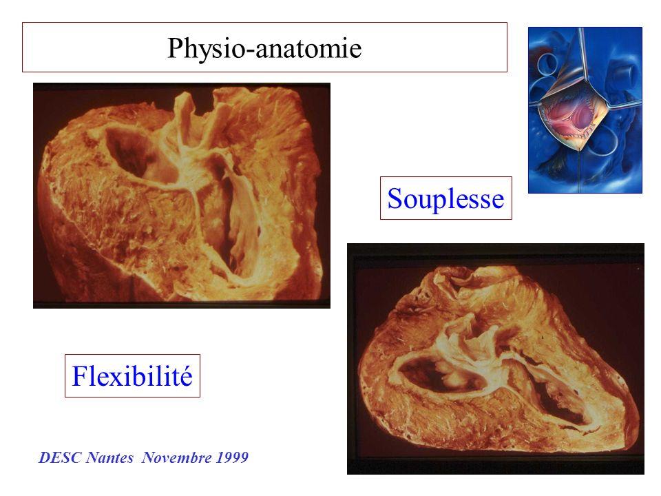 Physio-anatomie Flexibilité Souplesse DESC Nantes Novembre 1999