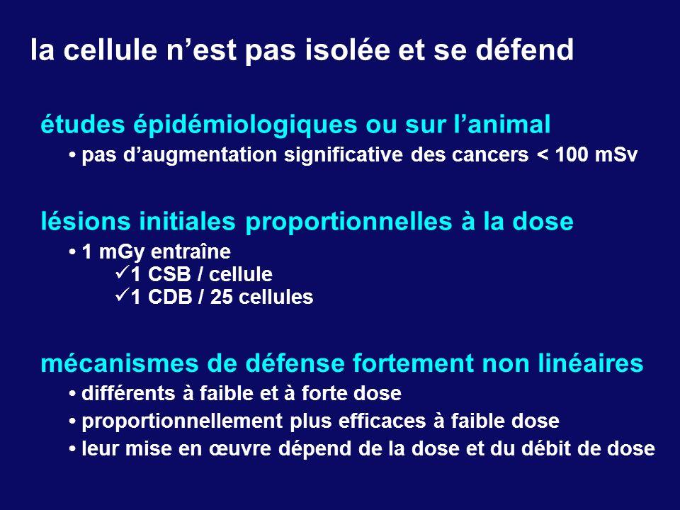 lésions initiales proportionnelles à la dose 1 mGy entraîne 1 CSB / cellule 1 CDB / 25 cellules mécanismes de défense fortement non linéaires différen