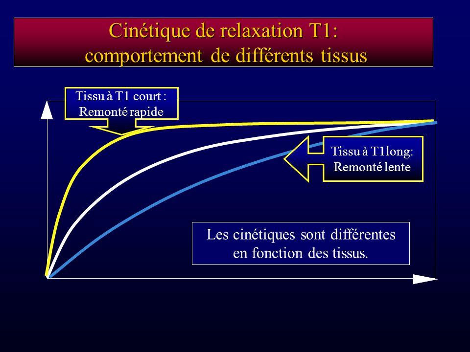 Cinétique de relaxation T1: comportement de différents tissus Les cinétiques sont différentes en fonction des tissus. Tissu à T1 court : Remonté rapid