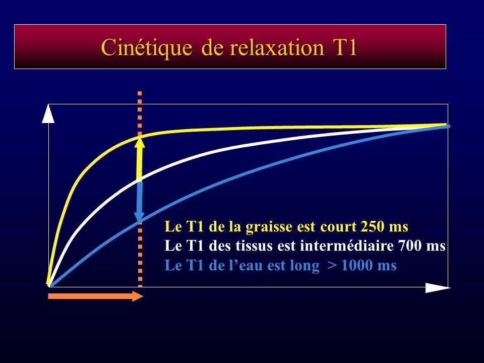 Cinétique de relaxation T1 Le T1 de la graisse est court 250 ms Le T1 des tissus est intermédiaire 700 ms Le T1 de leau est long > 1000 ms