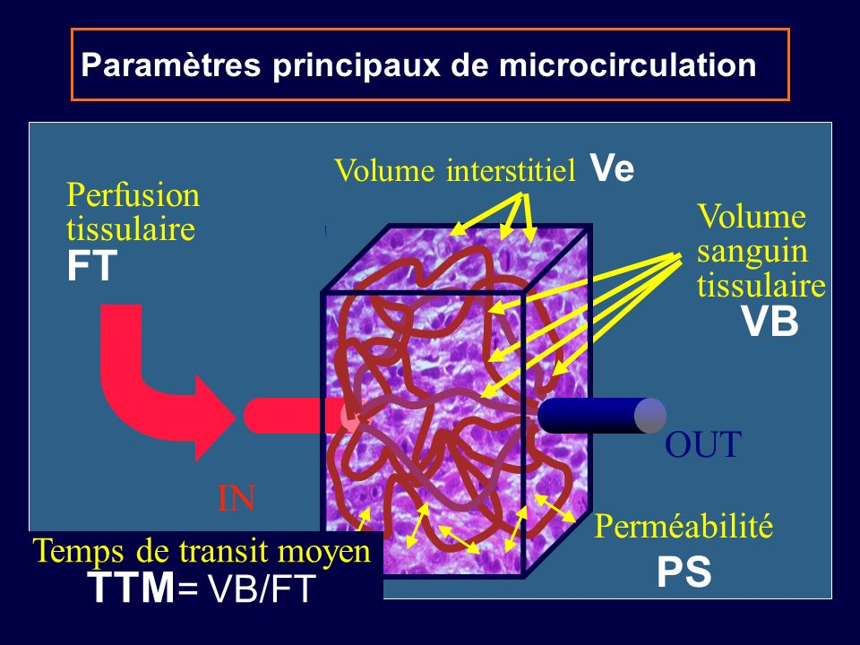 IN OUT Paramètres principaux de microcirculation Perfusion tissulaire FT Volume sanguin tissulaire VB Perméabilité PS Volume interstitiel Ve Temps de