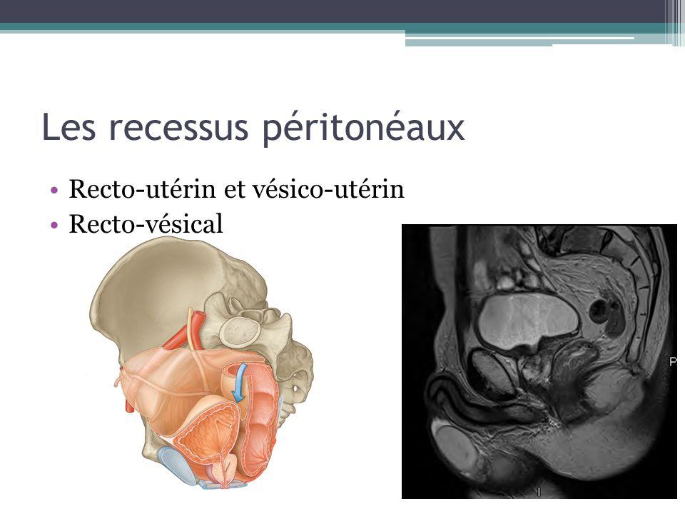 Les recessus péritonéaux Recto-utérin et vésico-utérin Recto-vésical