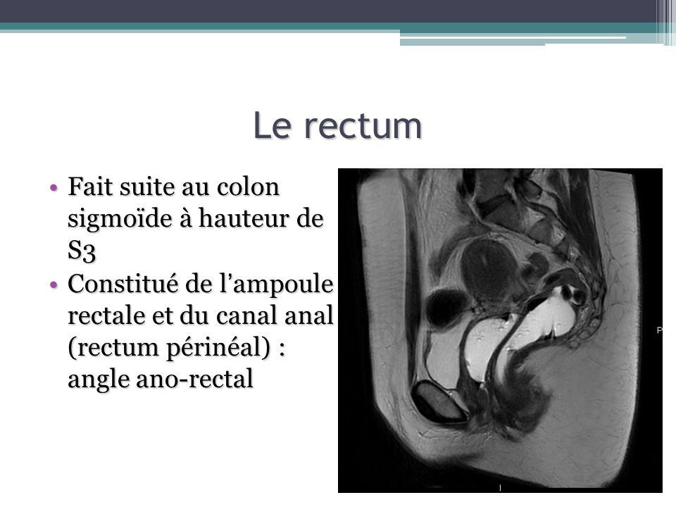 Le rectum Fait suite au colon sigmoïde à hauteur de S3Fait suite au colon sigmoïde à hauteur de S3 Constitué de lampoule rectale et du canal anal (rec