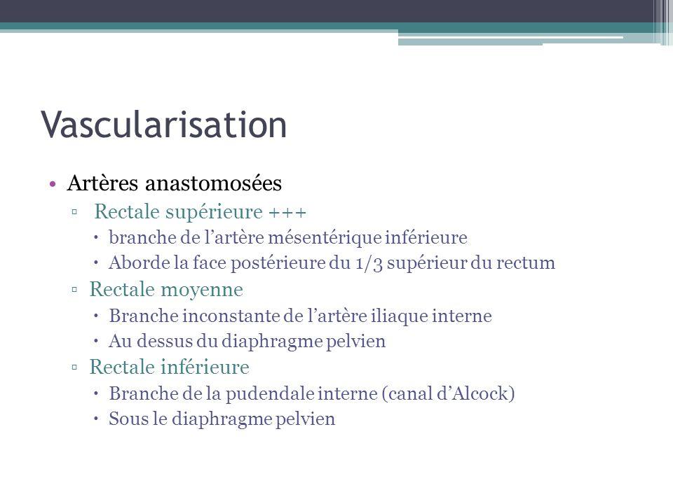 Vascularisation Artères anastomosées Rectale supérieure +++ branche de lartère mésentérique inférieure Aborde la face postérieure du 1/3 supérieur du
