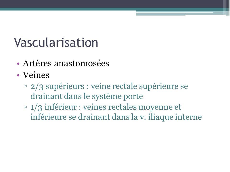 Vascularisation Artères anastomosées Veines 2/3 supérieurs : veine rectale supérieure se drainant dans le système porte 1/3 inférieur : veines rectale