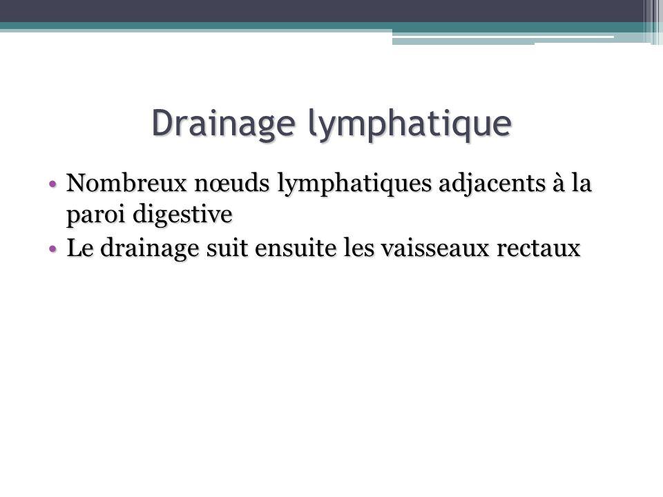 Drainage lymphatique Nombreux nœuds lymphatiques adjacents à la paroi digestiveNombreux nœuds lymphatiques adjacents à la paroi digestive Le drainage