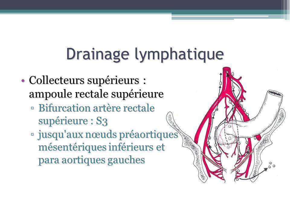 Drainage lymphatique Collecteurs supérieurs : ampoule rectale supérieureCollecteurs supérieurs : ampoule rectale supérieure Bifurcation artère rectale