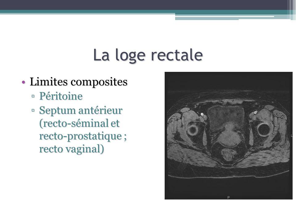 La loge rectale Limites compositesLimites composites PéritoinePéritoine Septum antérieur (recto-séminal et recto-prostatique ; recto vaginal)Septum an