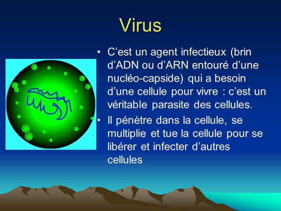 Virus Cest un agent infectieux (brin dADN ou dARN entouré dune nucléo-capside) qui a besoin dune cellule pour vivre : cest un véritable parasite des c