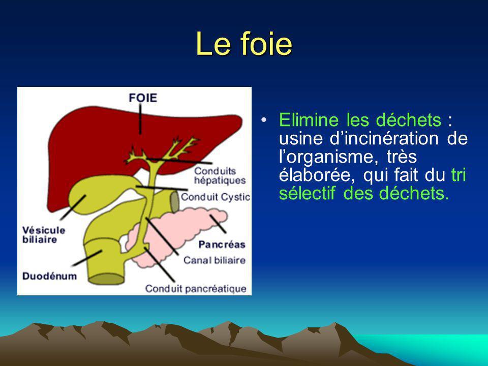 Le foie Elimine les déchets : usine dincinération de lorganisme, très élaborée, qui fait du tri sélectif des déchets.